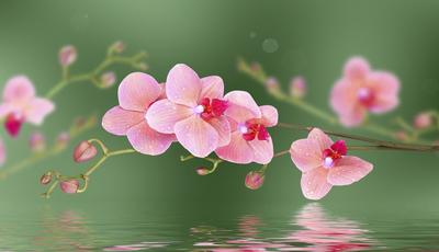 Cuidar de orquídeas sem as danificar. Os erros a evitar