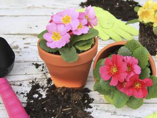 Maio florido maio