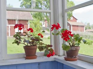 Interiores frescos e floridos em maio