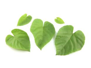 9 plantas que protegem o seu coração