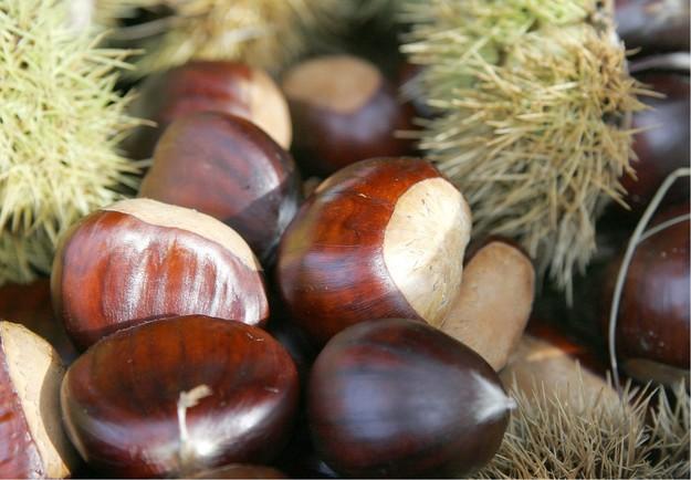 As três denominações existentes em Trás-os-Montes e Alto Douro correspondem a 85 por cento da produção de castanha nacional