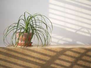Plantas de interior mais vivazes
