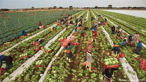 Cuanza Sul: Responsável da Sediac defende actividade agrícola para diversificar economia