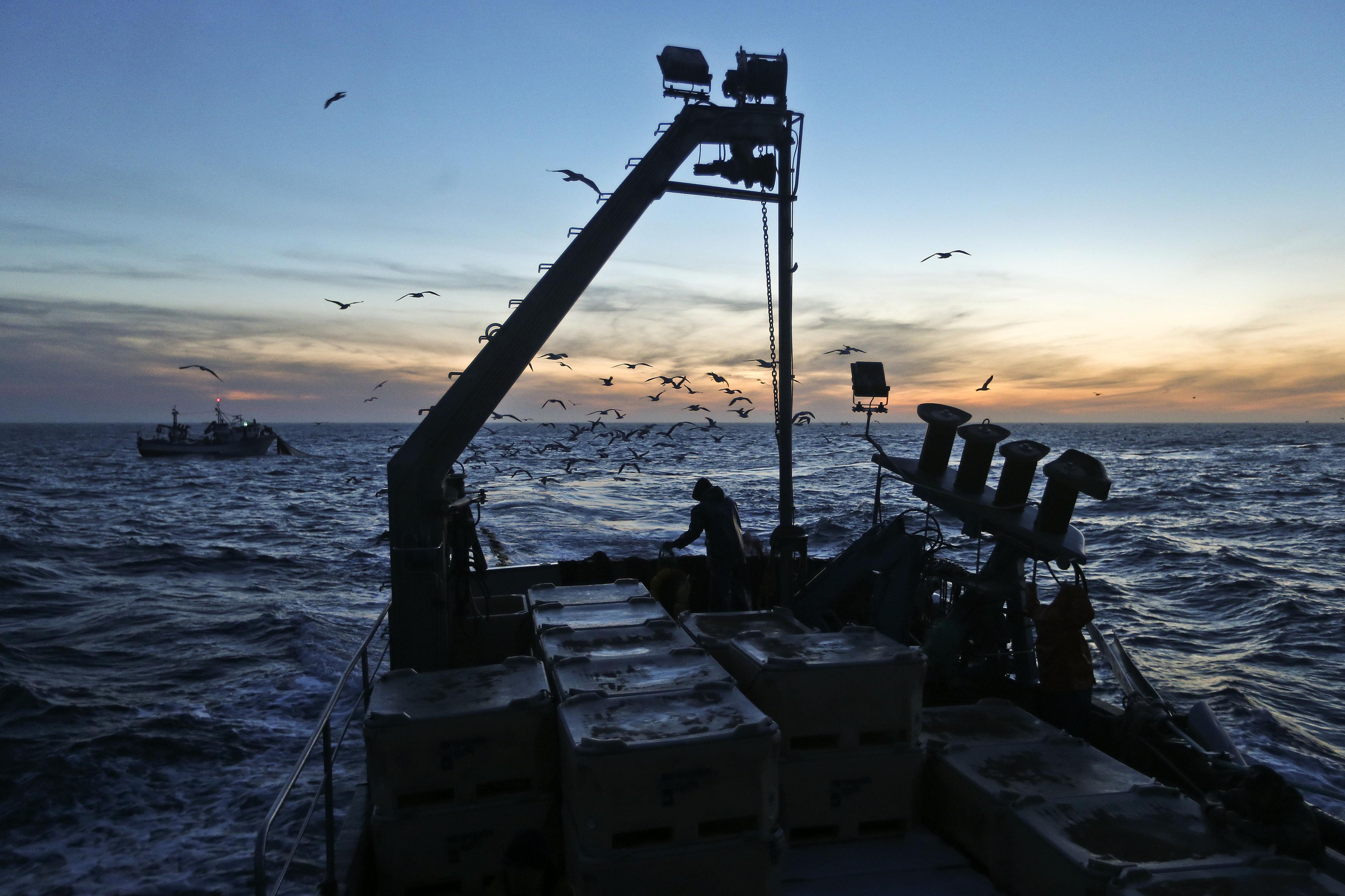 """APROPESCA garante que há """"sardinha em abundância"""" na costa portuguesa"""
